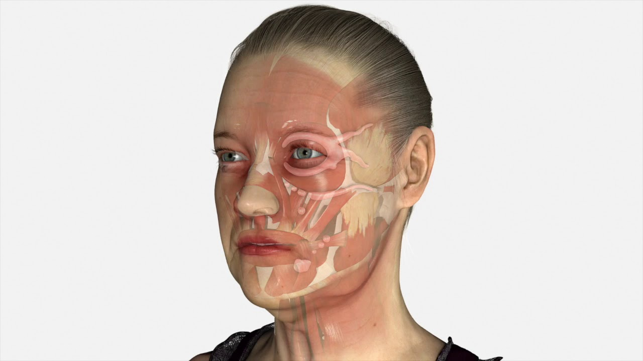 Watch Video: Facelift surgery, what anatomy changes with age?
